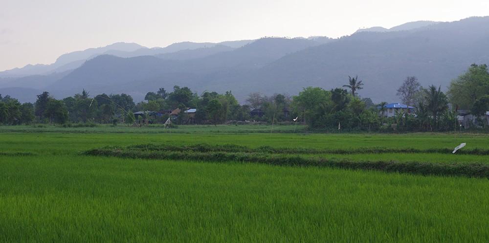 Maing thauk entre terre et eau - Terre et eau witry les reims ...
